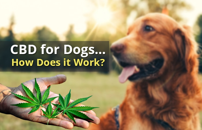 dog cbd oil